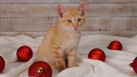 Cute ginger cat sitting among red christmas ball decorations - static camera Stock Footage