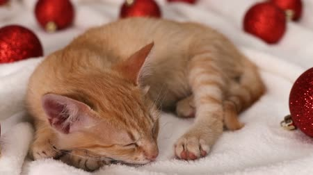 Cute ginger cat sleeping among red christmas ball decorations - sliding camera