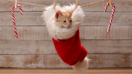 Cute ginger cat sitting in a santa hat hanging on drying line, looking around and relaxing and swinging - static camera Stock Footage