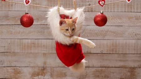 Cute ginger cat sitting in a santa hat hanging on drying line, playing with christmas ball decoration then jumping out and leaving - static camera