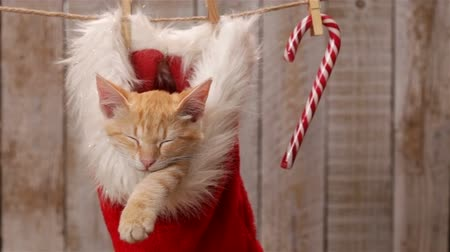 Cute ginger cat sleeping in a santa hat hanging on drying line, swinging gently - static camera, closeup