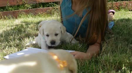 Girl lying on the grass trying to read and playing with labrador puppies in the shade Stock Footage