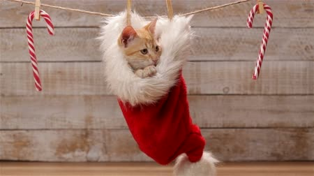Cute ginger cat sitting in a santa hat hanging on drying line, looking around and relaxing then jumping out and leaving - static camera