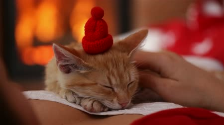 Small kitten sleeping on woman chest in front of the fireplace - holidays season relaxation. Christmas and new year cuddle up - camera slide
