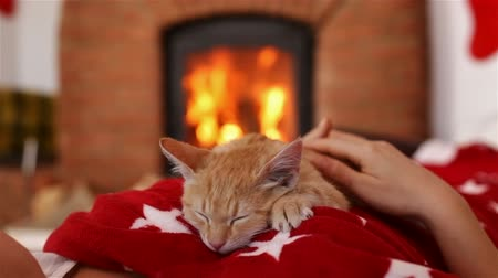 Small kitten sleeping on woman chest in front of the fireplace - holidays season relaxation. Christmas and new year cuddle up and watching the fire - camera slide