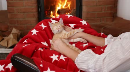 animal paws : Small kitten sleeping in woman lap in front of the fireplace - holidays season relaxation. Christmas and new year cuddle up and watching the fire - camera slide, medium shot Stock Footage