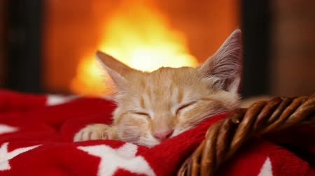 Kitten sleeping at the fireplace on red blanket - closeup, camera slide