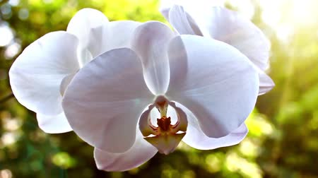 orchideák : White orchid on the nature