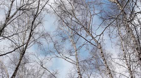 kimse : Winter trees and clouds