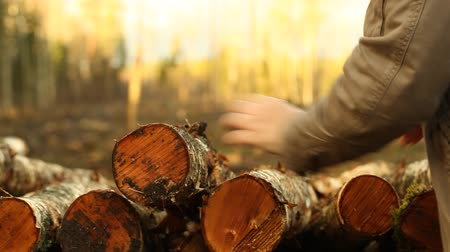 günlüğü : Lumberjack trying to sort of sawn timber