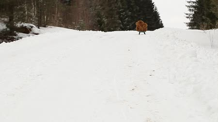 seasonal : Toy bear on sled riding down the hill Stock Footage