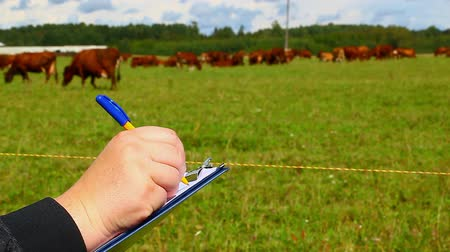 farmer animals : Farmer writing near the cows at pasture Stock Footage