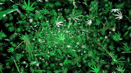 конопля : Flying cannabis leaves on a black background