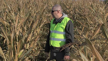 rolnik : Anxious farmer on cold corn field in autumn