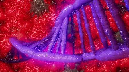 medicals : DNA helix in purple and red colors