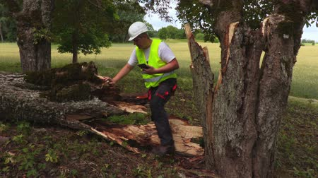 dead wood : Worker with tablet near fallen tree