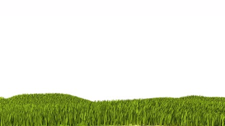 çim : Far Grass and Wind Cartoon-style loop Animation
