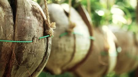 repousante : Suspended pots made from natural materials, pulling focus Stock Footage