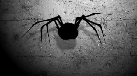 dia das bruxas : A silhouette spider appears from above