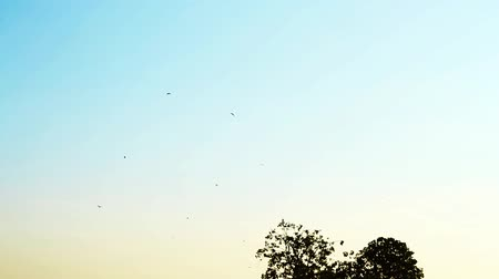 moscas : Birds and blue sky Stock Footage