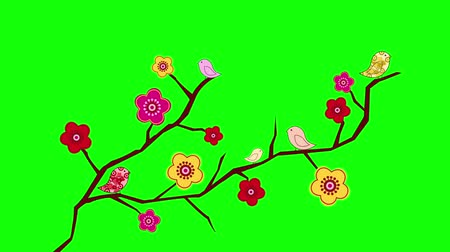 ano novo chinês : Plum blossoms on green screen