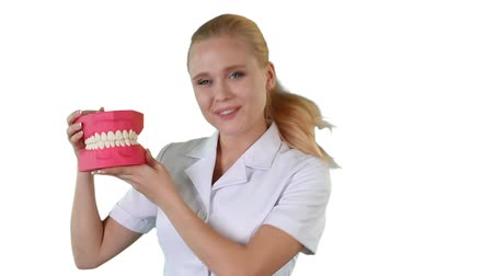 dişçi : Dentist holding the teeth model