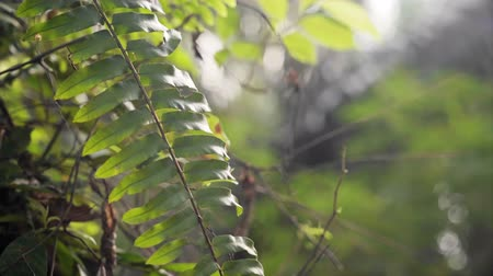 kapradina : Close up of ferns in rural area
