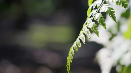 farn : Close up of fern leaves