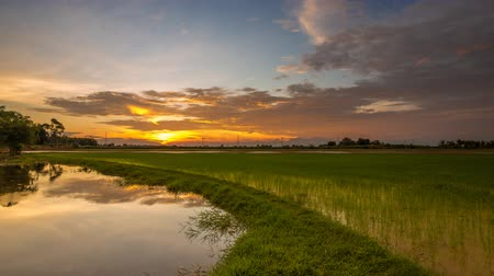 kedah : Sunset time lapse at a paddy field