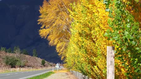 проливая : Wind blowing. Autumn trees by the roadside Стоковые видеозаписи