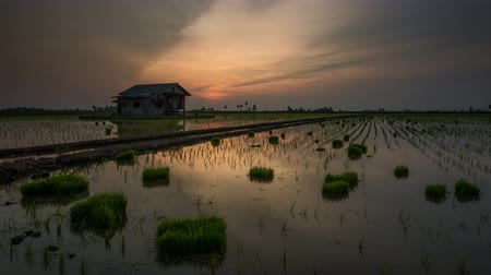 subsistence : Time Lapse - Sunset at a house at a paddy field.