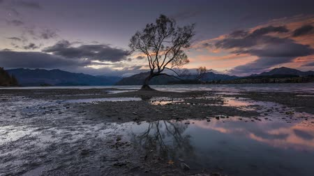 baixo ângulo : Time Lapse - Lake Wanaka with That Wanaka Tree at Sunset during low tide. Majestic sunset and clouds moving. Camera pan right. Wide Angle Shot