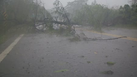 tető : Fallen tree blocking road and rain in typhoon 1 slow motion