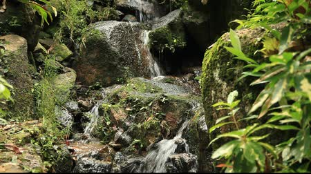 floresta tropical : Zen Waterfall in Nature