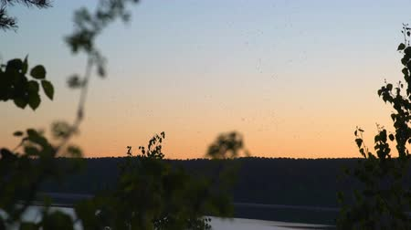 pszczoła : Flying insects in nature at sunset sky Wideo