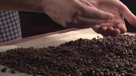 defect : man hands sorting poor qualitys of rusted coffee beans. Stock Footage