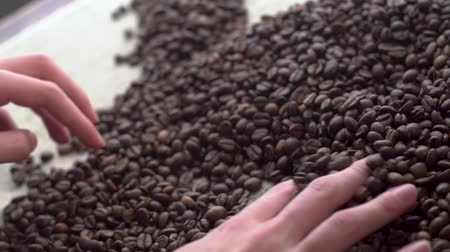 agricultural economy : close up woman hands sorting poor qualitys of rusted coffee beans. Stock Footage