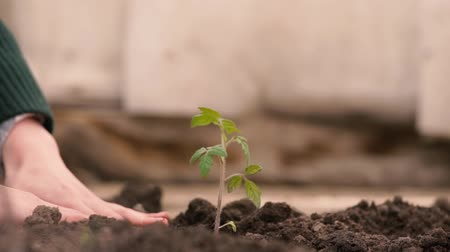 Hands of farmer growing and nurturing tree growing on fertile soil with green and yellow background, nurturing baby plant, protect nature.