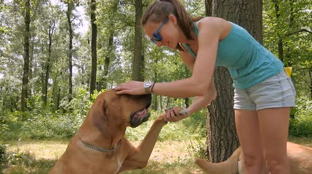 kobieta pies : Nice girl in sunglasses caress her dog in the park Wideo