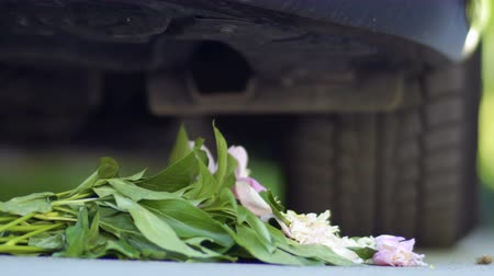 piwonie : Bouquet of flowers under the wheels of the car. Close-up. Wideo