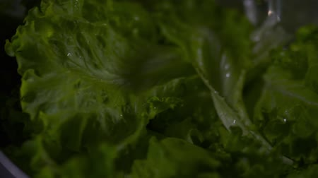 focus on foreground : Salad leaves with water drops on a black background. Camera moves from left to right. Close-up. Black background.