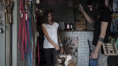 fancier : Seller passing the collar to the dog owner. Female came shopping to the pet store with husky. Seller helps to choose accessories for dog. Slow motion.