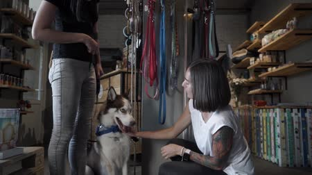 wolf dog : Seller corrects the decoration on the husky. Beautiful girl petting a dog. Hostess with a husky in a pet store.