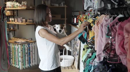 fancier : Beautiful woman chooses clothes for her dog. Jack Russell Terrier in the arms of a girl in a pet store. Stock Footage