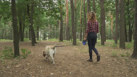 лабрадор : Young woman walks with the dog in forest. Lady is spending time with her labrador. Outdoor rest with favourite pet Стоковые видеозаписи