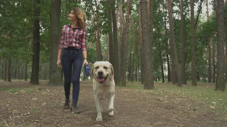tur : Young woman walks after the dog in forest. Lady is spending time with her labrador, she is happy and smiling. Outdoor rest with favourite pet. Dog is coming to camera