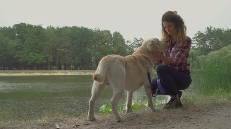 retriever : Curly lady is petting her dog near the river. Outdoor rest with favourite pet. Girl is petting her labrador in the bank of the lake Stock Footage