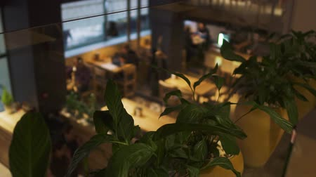 официант : Plants in flower pots growing inside cafe on second floor in the foreground close up. Small modern restaurant room with people blurred in the background. Top view