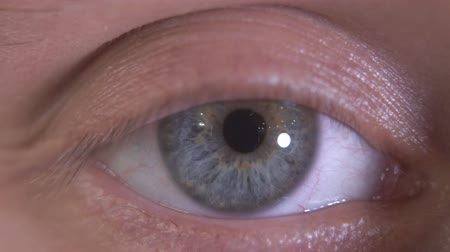 macro shooting : Close up of the beautiful gray eye of a human. Macro detailed shooting. The guy blinking slowly, looking in camera