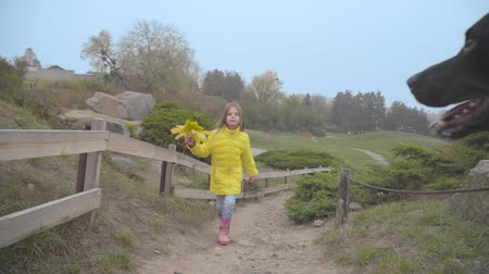 Cheerful Caucasian girl in yellow coat jumping along the fence in autumn park. Her dobermans head appears on the right and hides back. Happy child resting outdoors Stock Footage